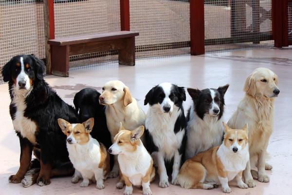 動物の癒しパワーを取り入れる介護施設がすごい